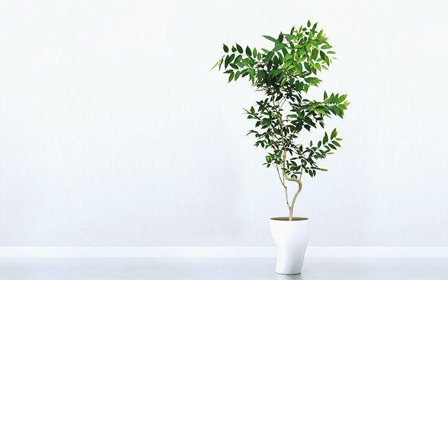 GREEN RENTAL